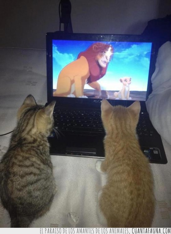 el rey león,gato,laptop,notebook,pelicula,portatil