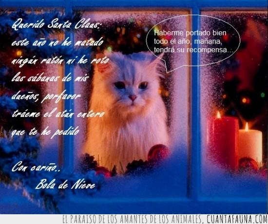 atún gigante,esperando a Santa Claus,esperando con ilusión,gato bueno