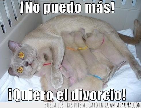 agotada,cachorritos,camada,cansada,divorcio,madre