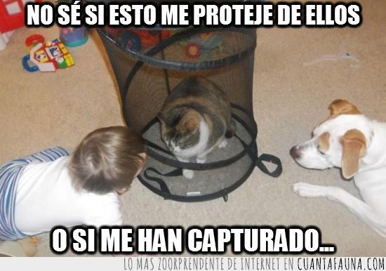 bebe,capturar,espiral,gato,juguetes,niño,perro,proteccion