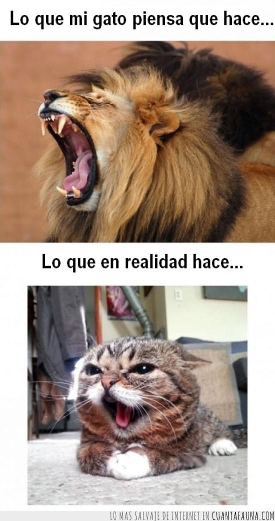 gato,imaginacion,leon,maullar,rugido,rugir