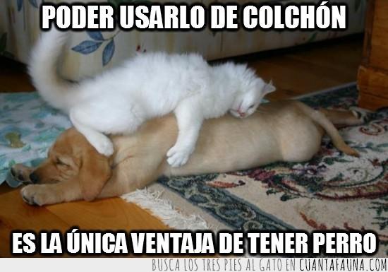 amigos,colchon,gato,perro,tener perro,ventaja
