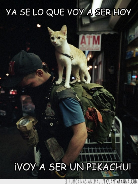 espalda,Gato,gato montado sobre persona,persona,pikachu,pikagato