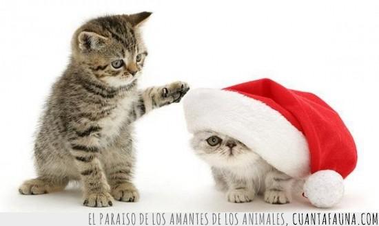 gatos,gorrito de papa noel,navidad,regalos