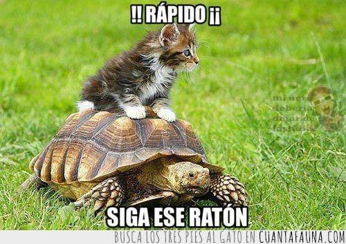 gato,maxima,raton,tortuga,velocidad