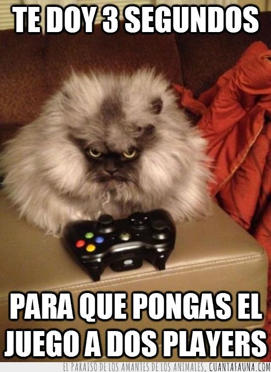 consola,dos players,enfadado,gato,mando,videojuegos,x-box