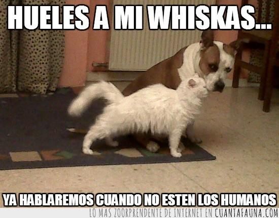 comida,gato,hablar,humanos,perro,whiskas