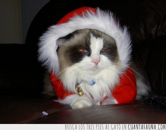 árbol,disfraz,gato,navidad,regalos