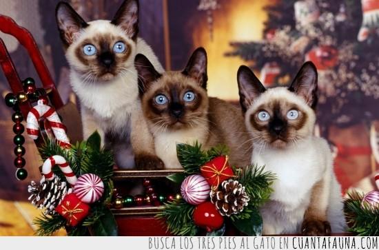 gato,navidad,papa noel,regalos,sorprendidos,sorpresa