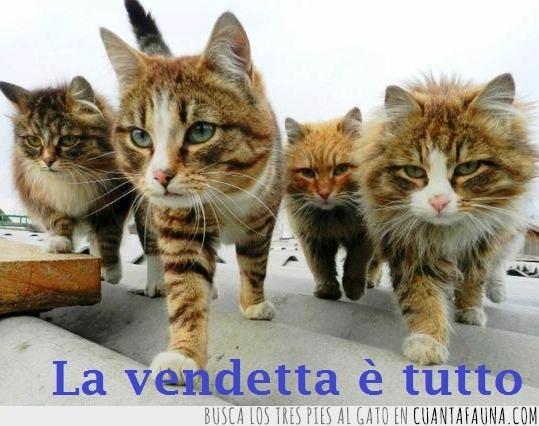 gatitos mafiosos,los malos del barrio,vendetta,venganza gatuna