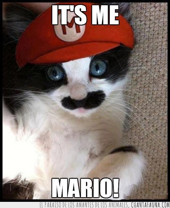 gorra,Mario Bros,Nintendo,ojos azules