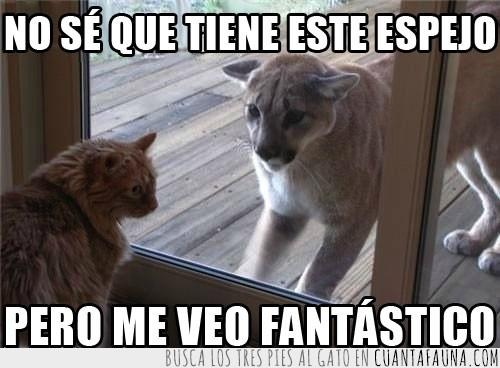 espejo,falso,felino,gato,gato salvaje,puma,ventana