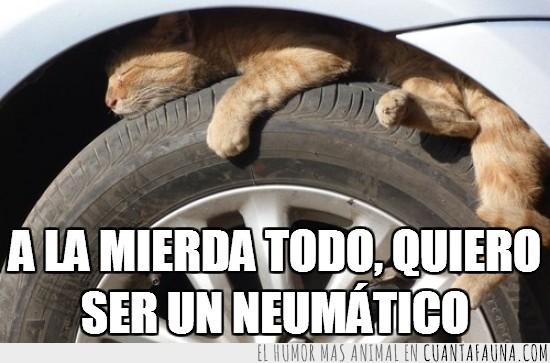 coches,gatitos,neumaticos,rueda,sombra