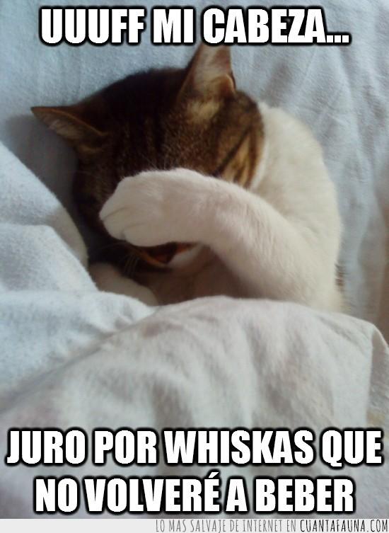 borracho,cabeza,gato,resaca,whiskas
