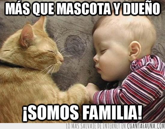 bebe,dormir,durmiendo,familia,gato,mascota y dueño,niño
