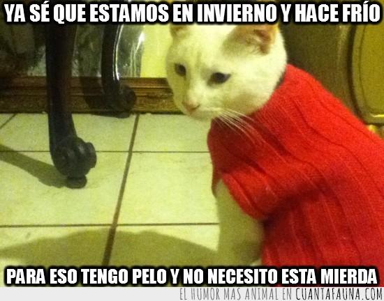 abuela,ganchillo,gato,jersey,rojo,sueter,traje