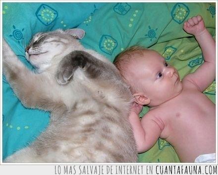 dia,Gato,gemelo,notado,suplantación