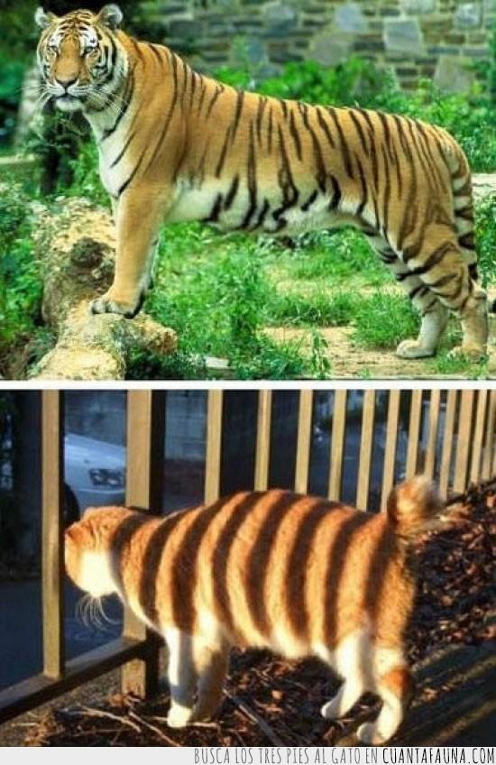 balcon,barrotes,gato,rayas,sombra,tigre