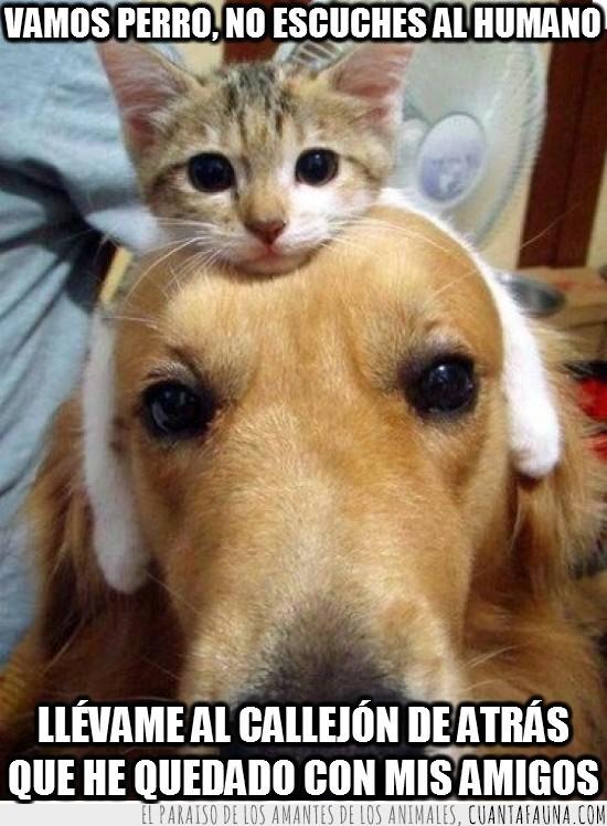 amigos,cabeza,callejon,gato,llevar,no escuches,patas en las orejas,perro