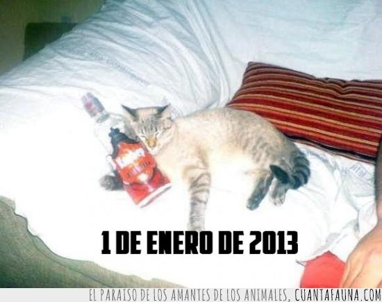 borracho,ciego,cotillón,dormir,fiesta,gatito,Gato,nochevieja,sofá,vodka