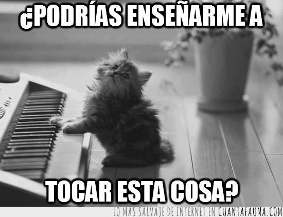 blanco y negro,gatito,pianista,piano,tocar