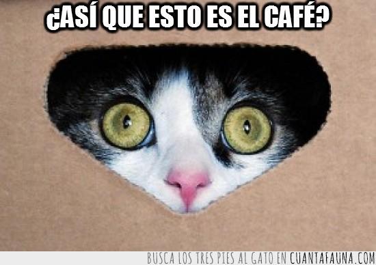 café,cafeina,loco,ojos como platos,orbitas,pupilas dilatadas