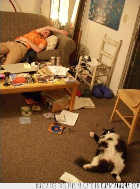 amigos,dueño,durmiendo,gatos,suelo,tirados
