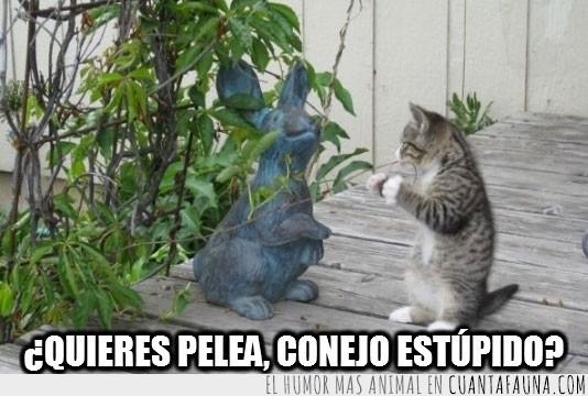 estatua,follonero,gato,jardin,pelea