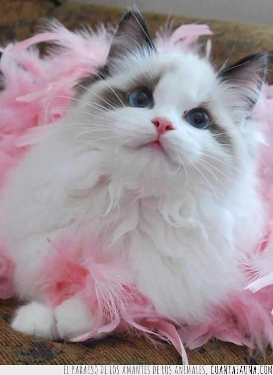 adorable,gata,mono,plumas rosas,rosa