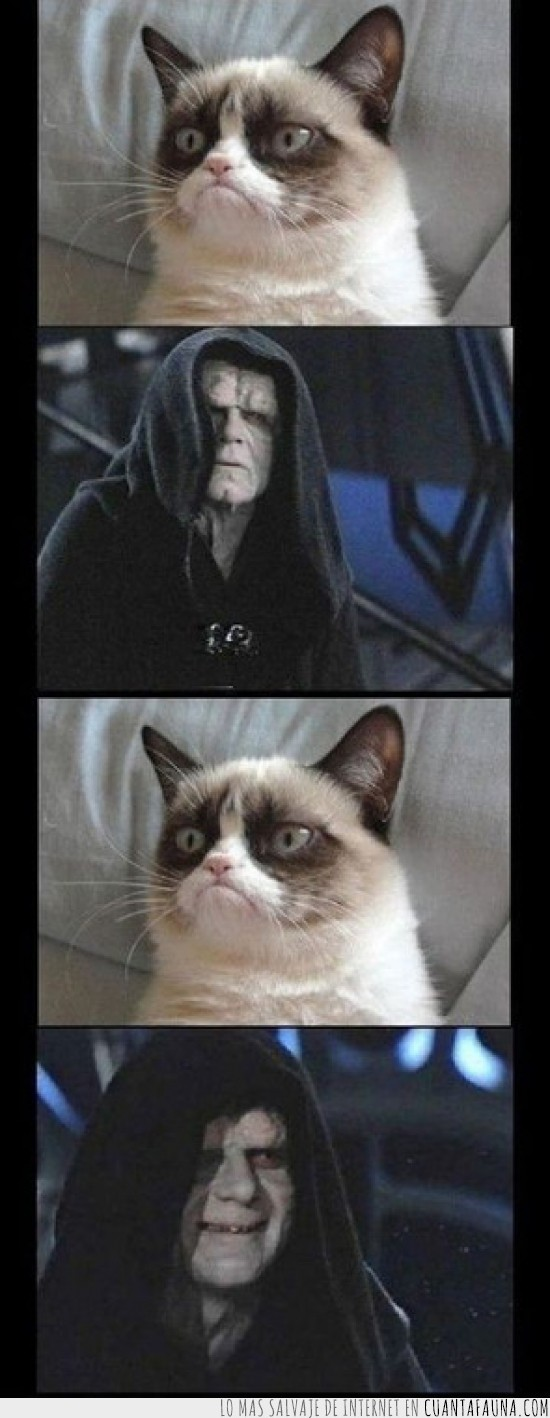 gato gruñon,grumpy cat,lado oscuro,senador palpatine