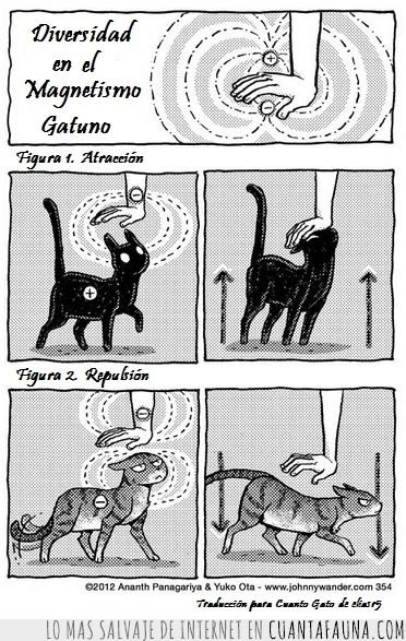 acercarse,atraccion,Gato,gatos,huir,imanes,Magnetismo,negativo,positivo,repulsion,troll