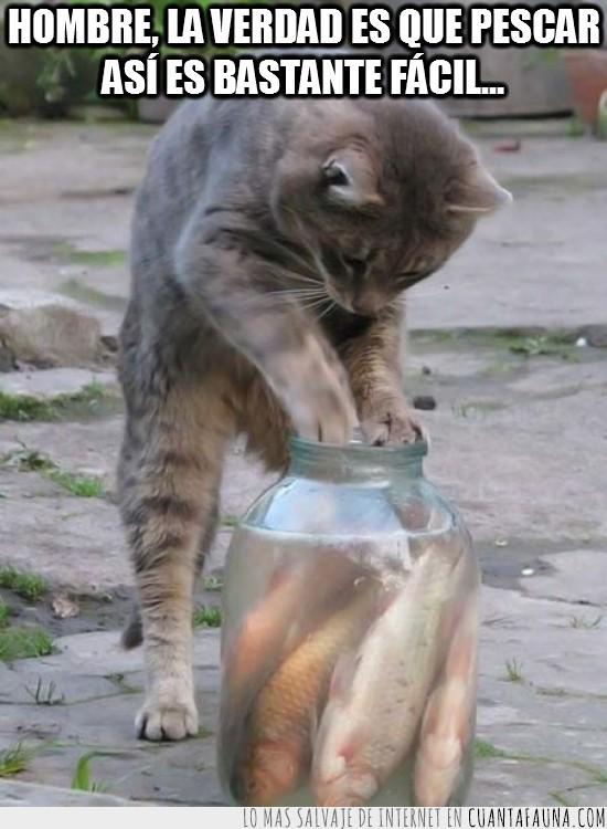 botella,en remojo,gato,pescado,pez