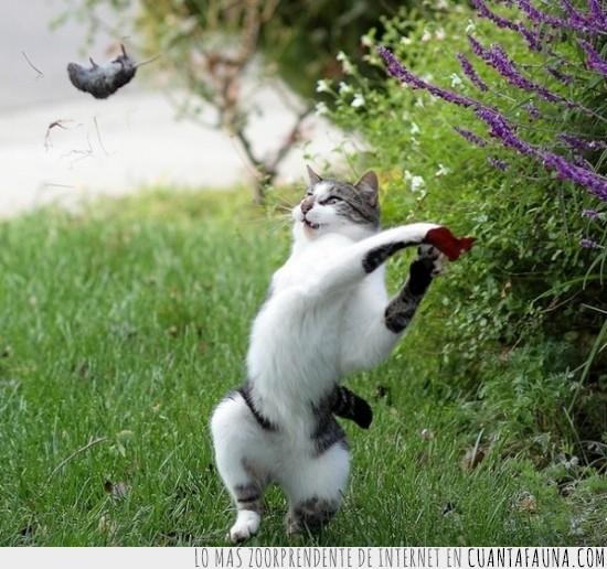 animales,gato,golpear,lanzar,ratón,y no vuelvas