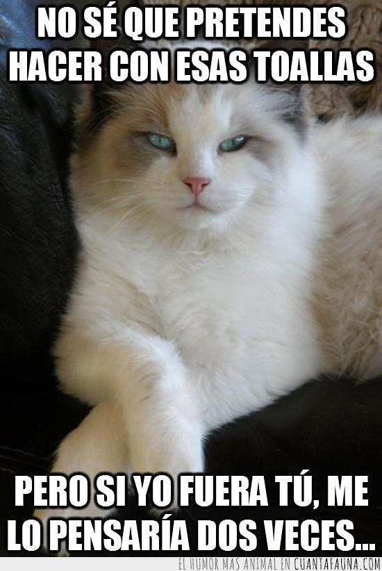 dos veces,gato,mirada fija,pensar,pose,toallas
