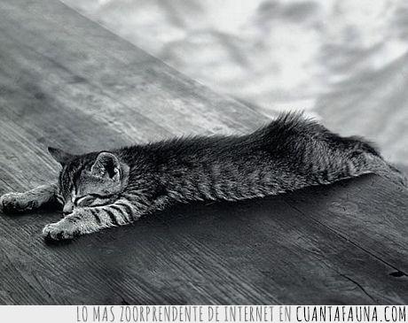 blanco y negro,cansado,dormido,gato,lunes,primera hora,tumbado
