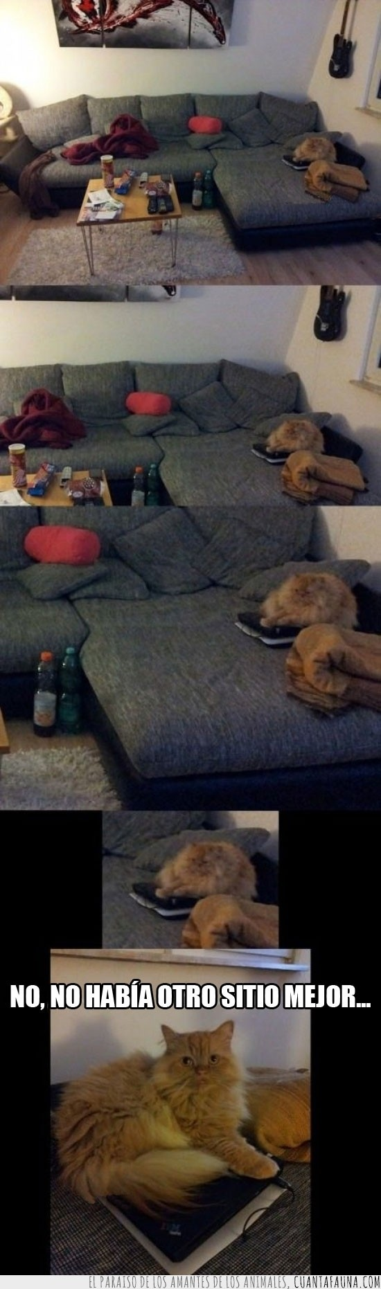 gato,grande,orednador portátil,otro,sentarse,sitio,sofá