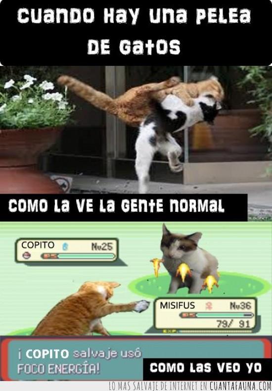 batalla pokemon,combate,copito,foco energia,gente normal,misifus,yo