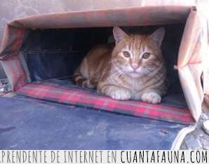 carrito,carro,compra,con ruedas,gatos,humanos