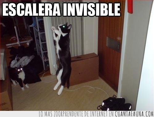 escalando,escalera,gato,invisible,saltando,salto