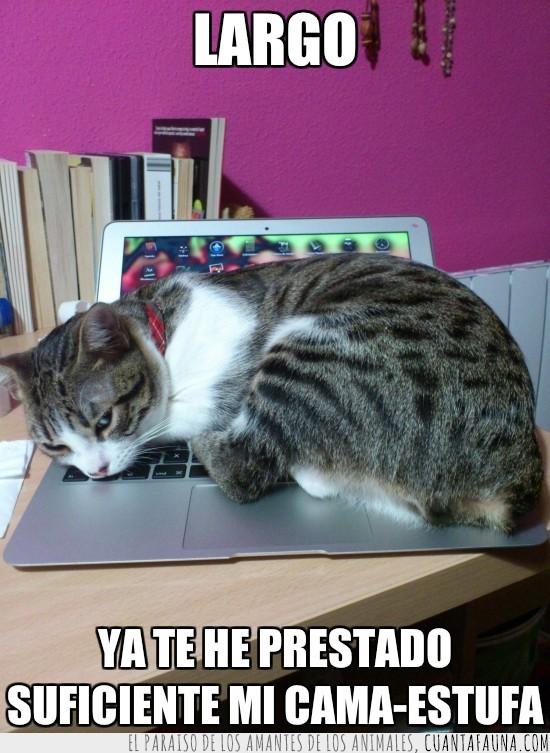 cama-estufa,gato,laptop,macbook,portatil