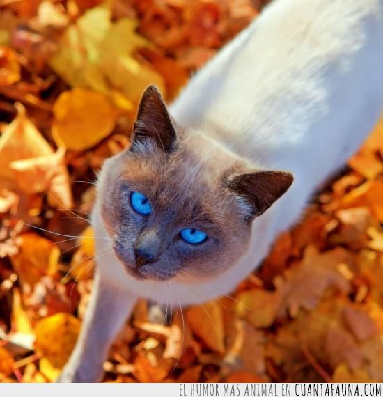hojas secas,marron,naranja,ojos azules,otoño,picado