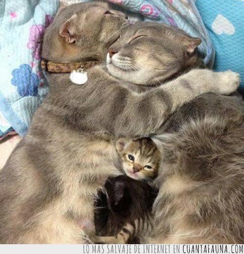 cachorro,cariño,familia,gato,madre,mimos,padre