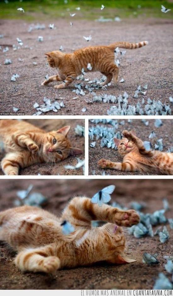 fotografia artistica,gato,jugar,mariposas azules