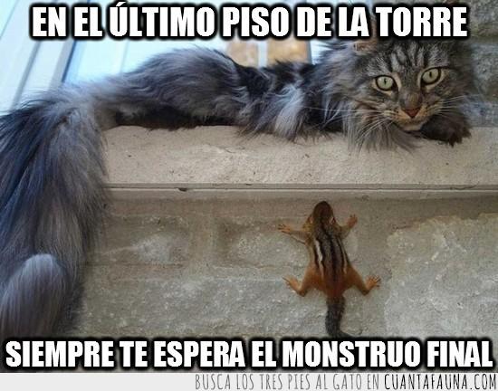 ardilla,escalar,gato,monstruo final,trepar,ultimo piso de la torre