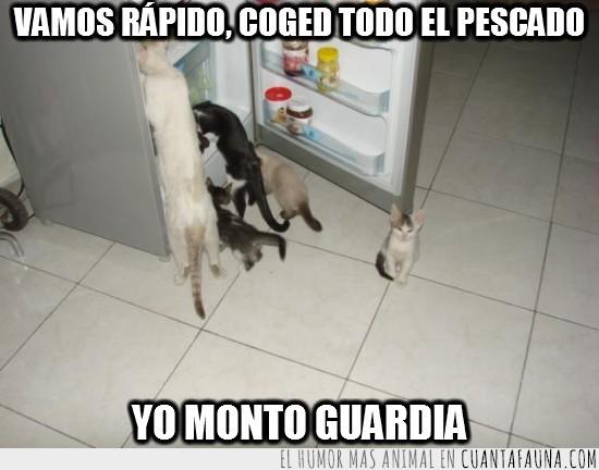 Familia gato,Gatos,guardia,nevera,Refrigerador,vigilar