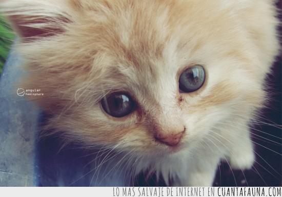 adorable,cachorro,gatito,primer plano