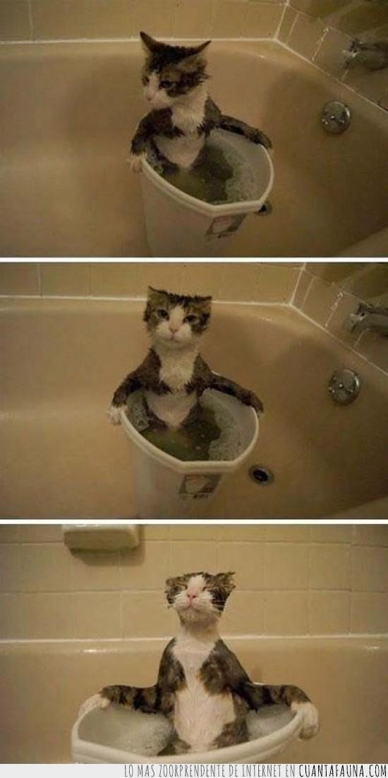 agua,agusto,baño,cubo,gato,gustito,placer