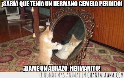 espejo,gato,guapo