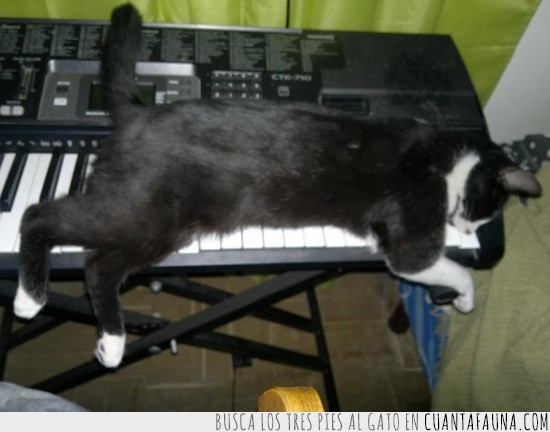 cansado,cat,gato pianista,keyboard cat,teclado