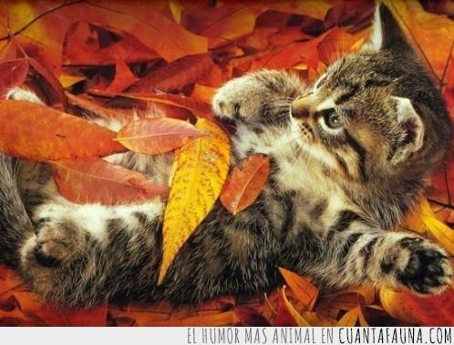 cama de hojas,contraste,gato,hojas secas,tacaño